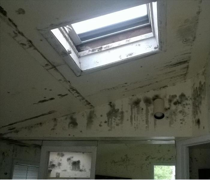 Moldy Pool House in Southampton, NY Before