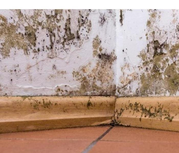 Mold Remediation Does Your East End Property Have a Mold Problem?